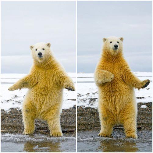 Polar Grooves